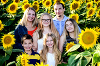 Sunflowers 2016 - Rogers